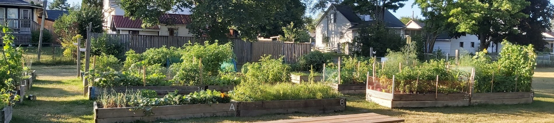 View of Bayview Heights Community Garden